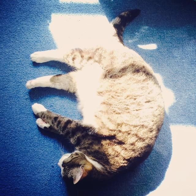 sonnenbaden #dailymausi