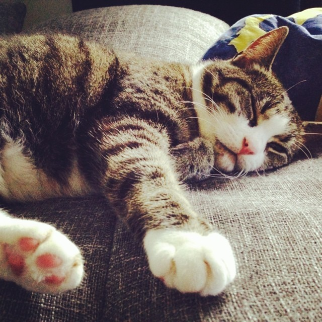 seeetness #dailymausi #cat